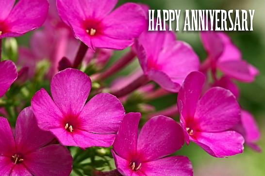 anniversary001-magentaflowersfrnti